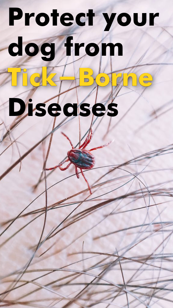 Protect your dog from Tick-Borne Disease